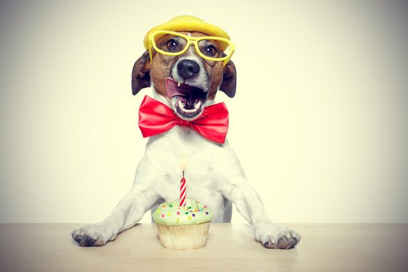 Birthday Cakes For Dogs In Los Angeles ~ Best birthday cakes los angeles u sellit
