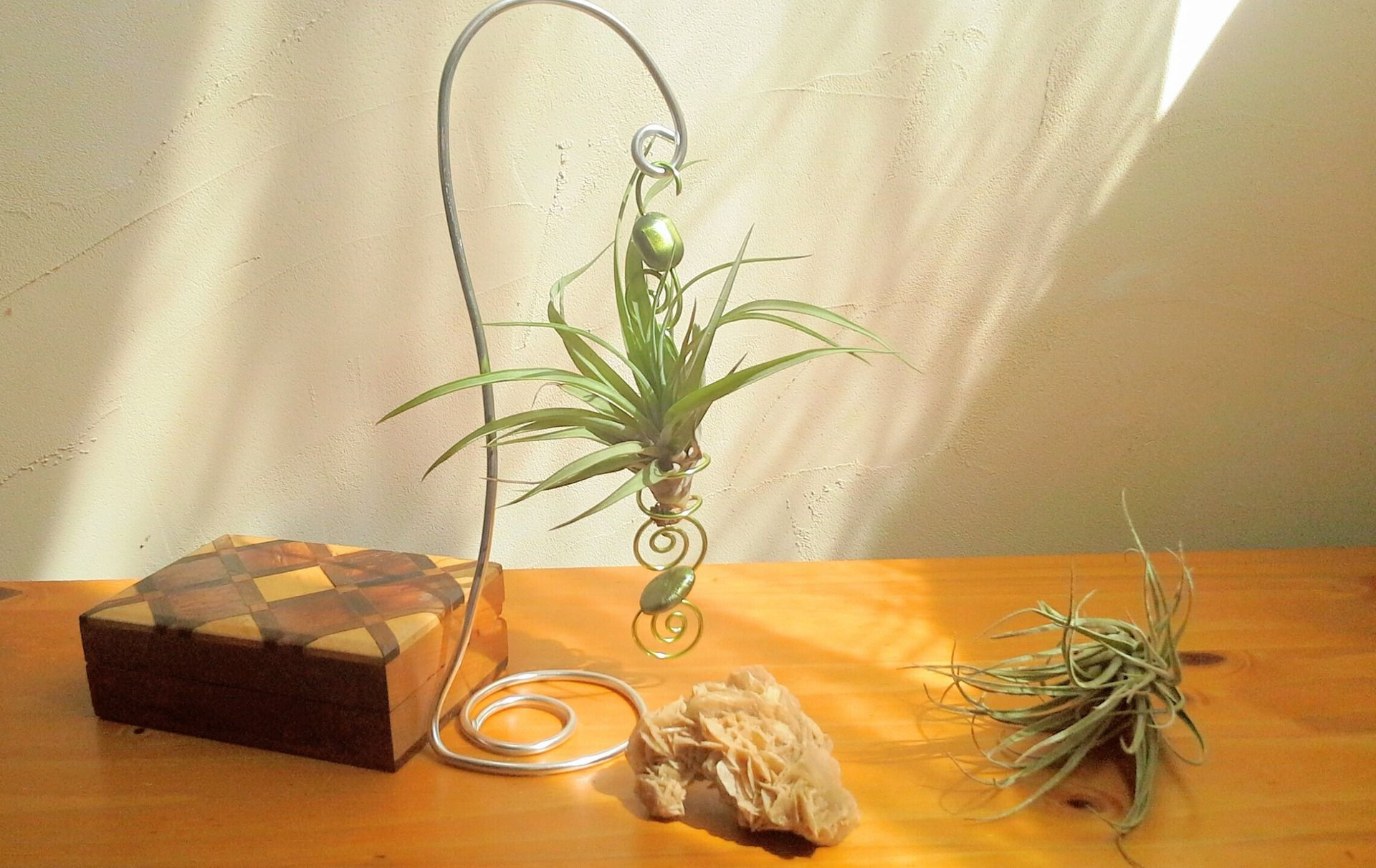 Tillandsia fille de l 39 air plante a rienne for Plante fille de l air