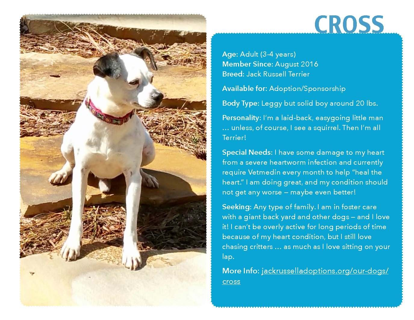 Cross is loving foster care, but would like a forever home even more! #JackRussell #Adoptable #Georgia