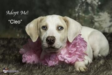 Check Out Cleo S Profile On Allpaws Com And Help Her Get Adopted