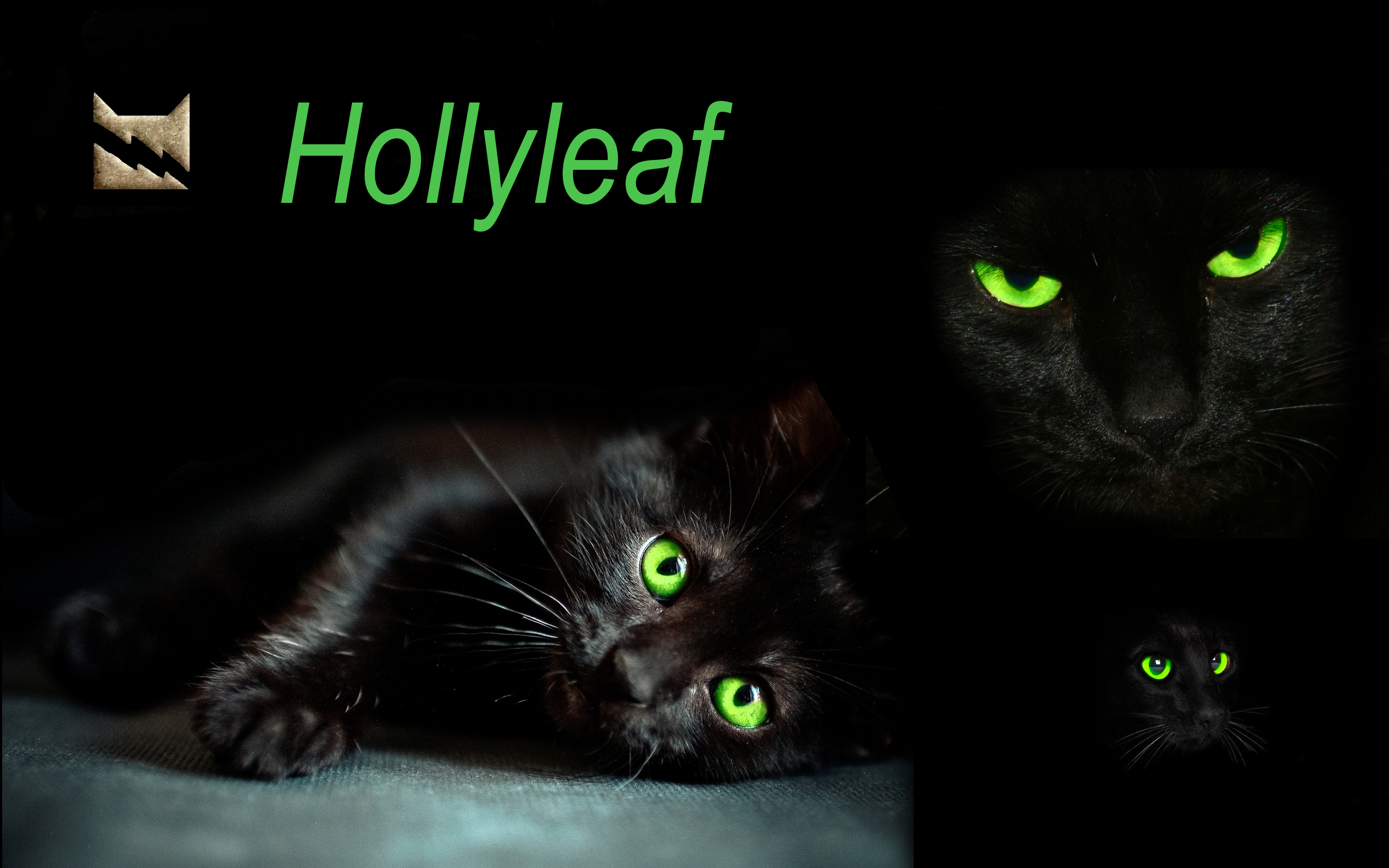 Hollyleaf Warrior Cats Cat Wallpaper Warrior Cat