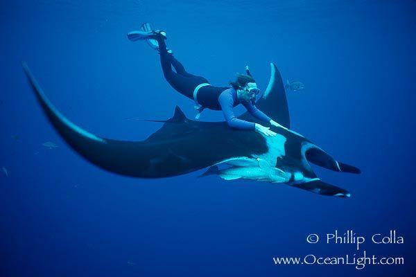riding a manta ray