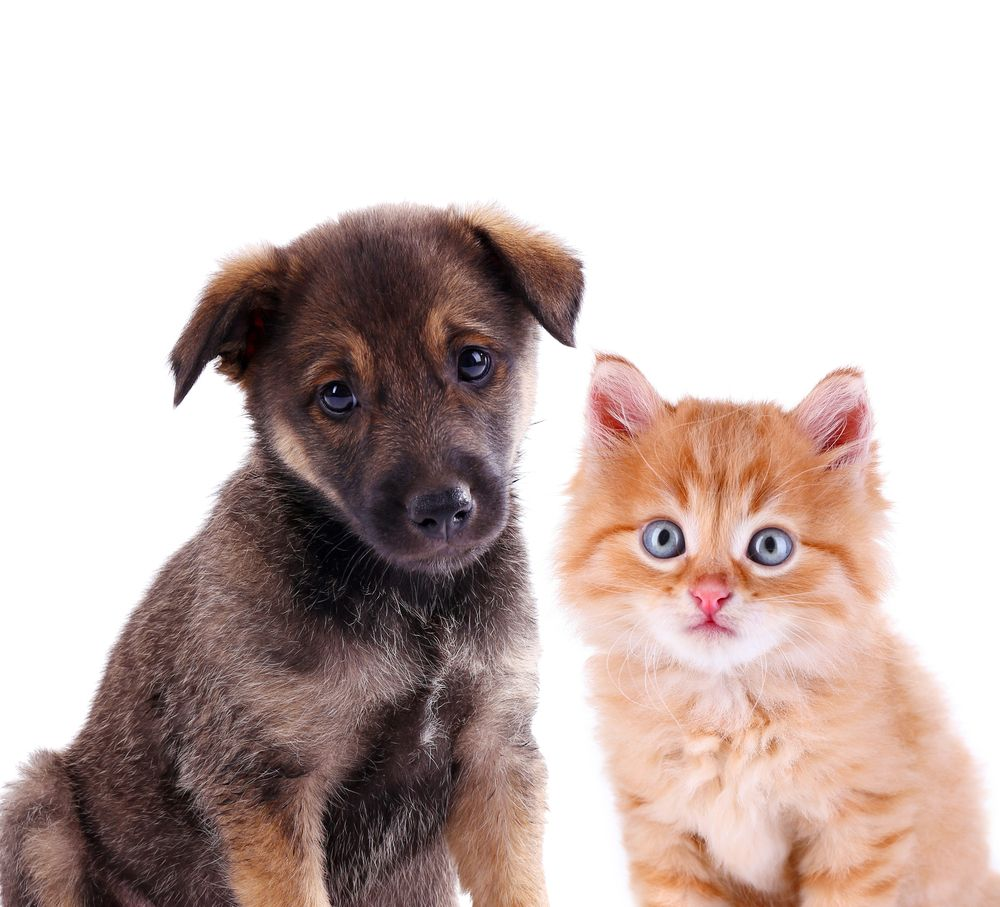 VIP New Puppy & Kitten Care Best Practices Animals