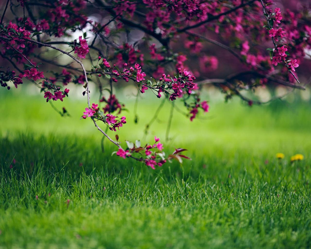 Skachat Oboi Trava Cvety Priroda Derevo Vesna Boke Razdel