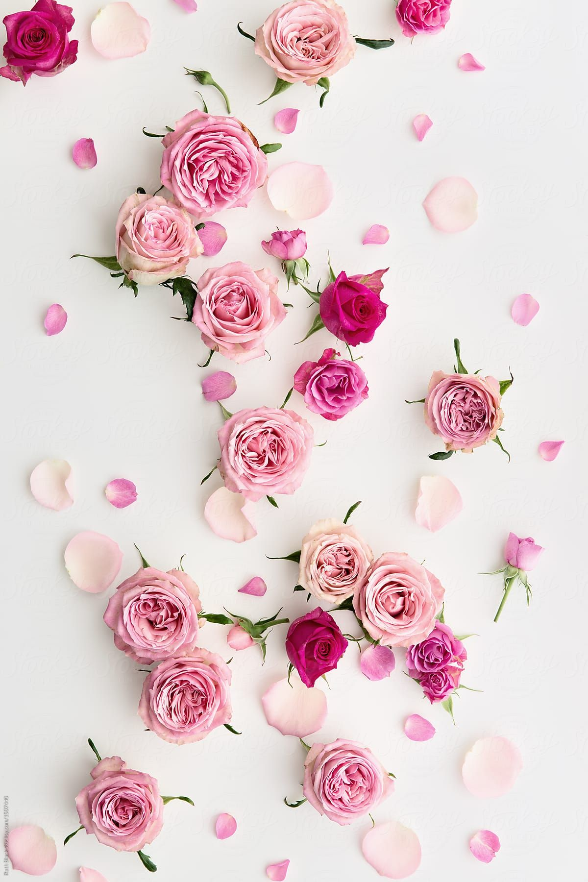 Collection Of Pink Roses And Petals Arranged On A White Background In 2020 Floral Wallpaper Phone Floral Wallpaper Iphone Flower Phone Wallpaper