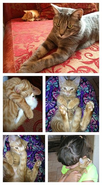 PicMonkey Collage by jennythebloggess, via Flickr