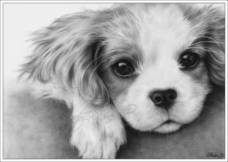 cavalier king charles dog art Its my first time drawing a
