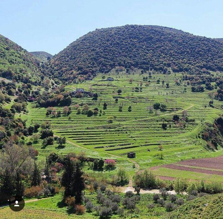 كفرصير جنوب لبنان Farmland Outdoor Vineyard
