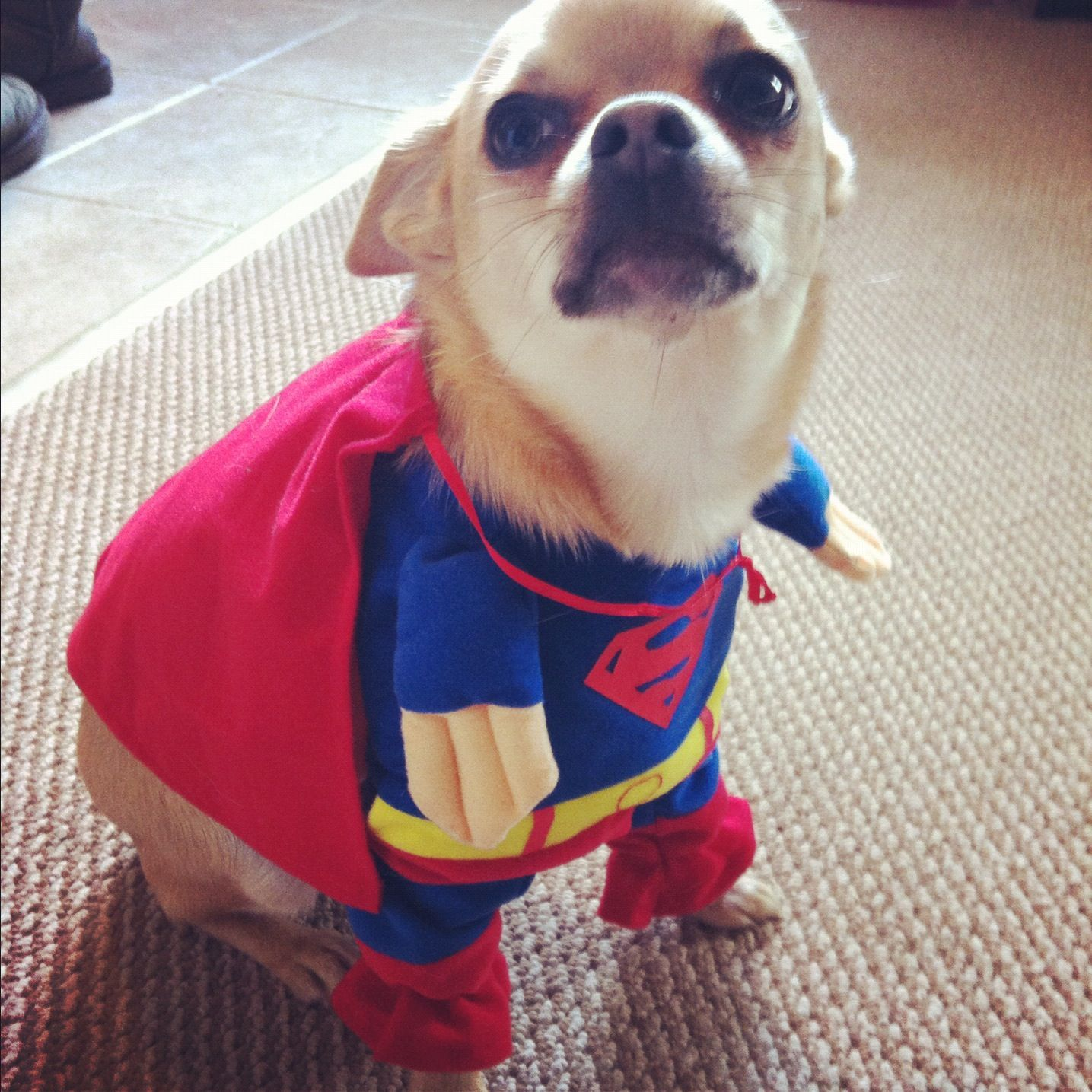 Chihuahua Costumes | Fun Dress-Up Costumes For Small Dogs