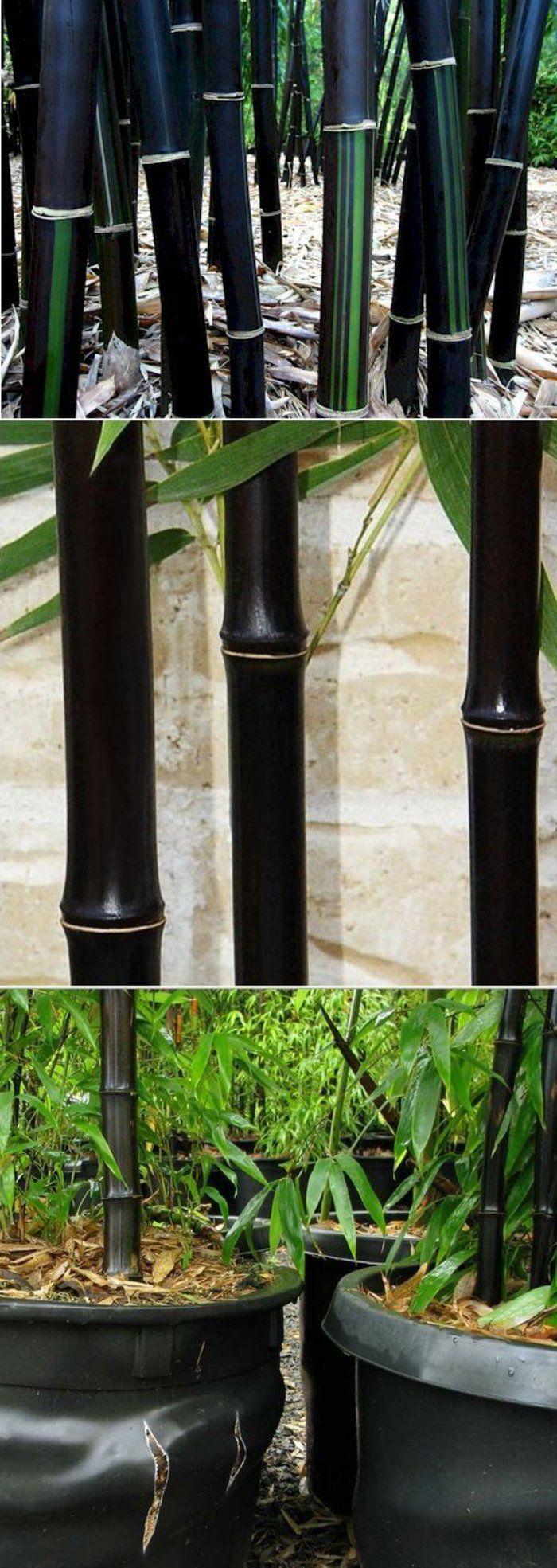 comment planter des bambous dans son jardin exterieur. Black Bedroom Furniture Sets. Home Design Ideas