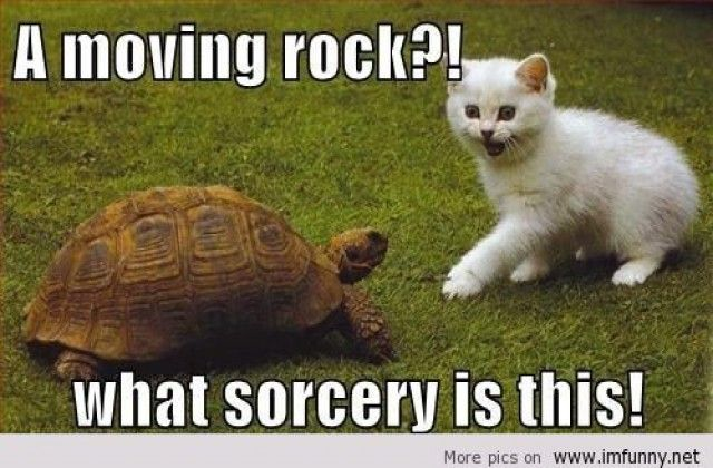 Image of: Drunk Funny Tortoise Meme Askideascom Featured Interesting Pictures Funny Tortoise Meme Askideascom Fanboy Pinterest Funny