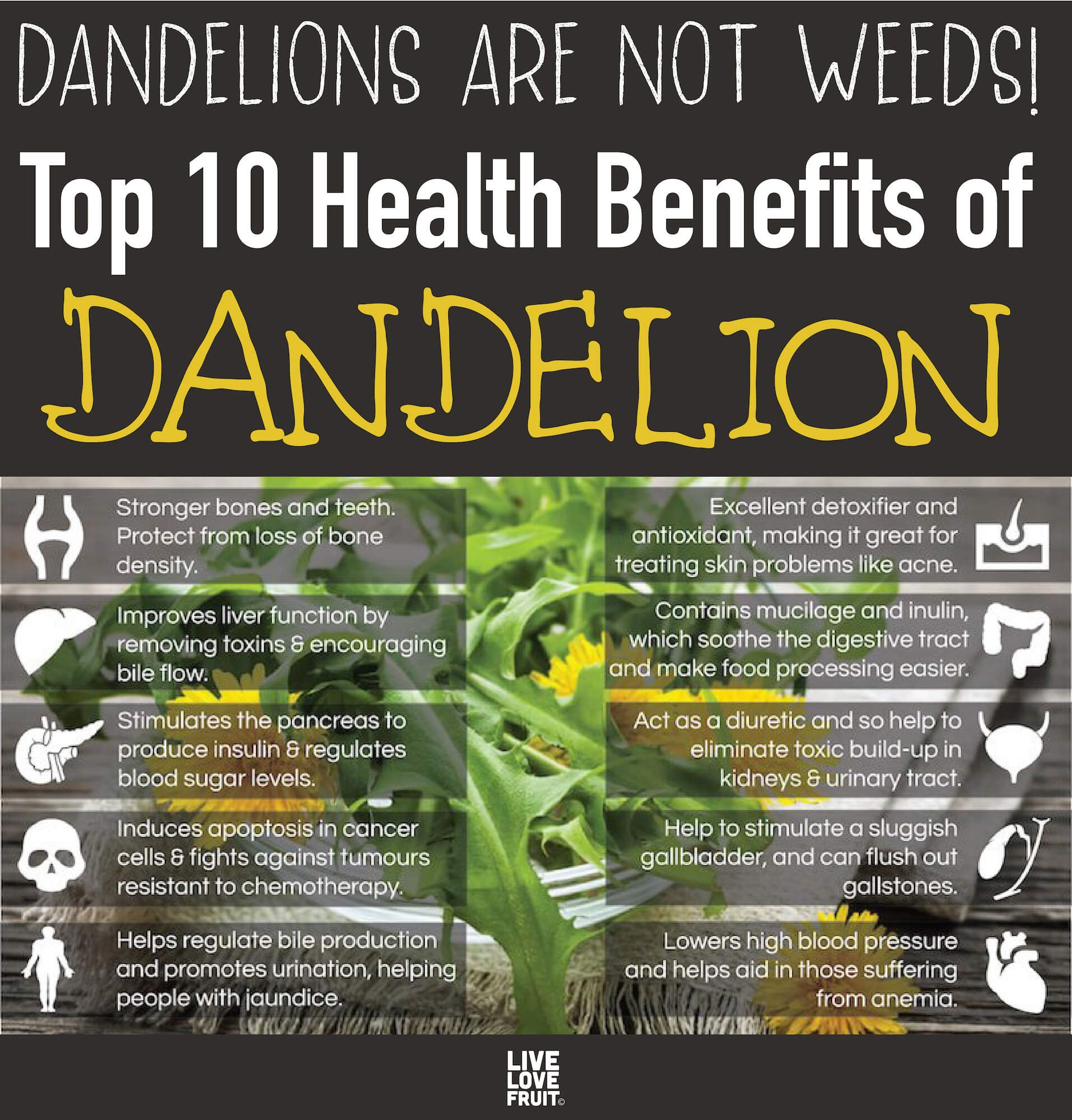 Dandelions Are Not Weeds! They Build Bones Better Than Calcium, Cleanse the Liver and Heal Eczema
