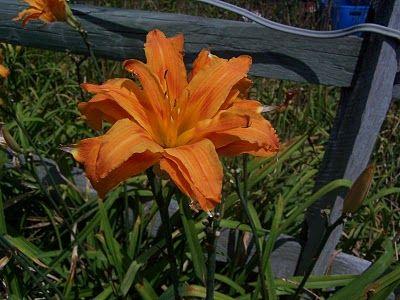 Glory's Garden: Best Plants to Grow in a Zone 5 Garden