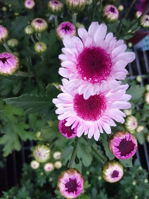 Purple flower nature