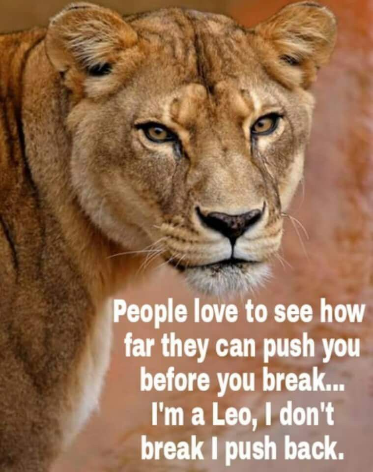 You better be careful  | Leo | Leo quotes, Lion quotes, Lion