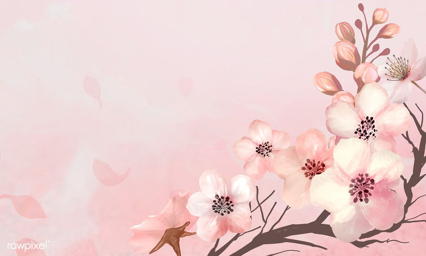 Download Premium Illustration Of Hand Drawn Cherry Blossoms On A Pink Flower Illustration Cherry Blossom Background Cherry Blossom Wallpaper