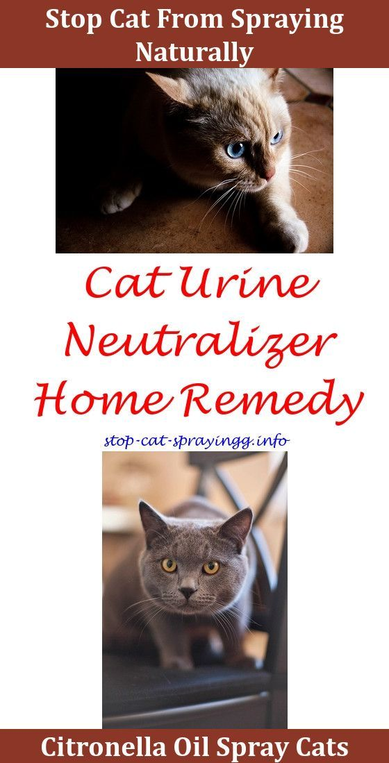 cat pee prevention cat away spray spray to keep cats out of christmas tree cat spraying out of litter box do tom cats spray after being neuteredcl - How To Keep Cat Away From Christmas Tree