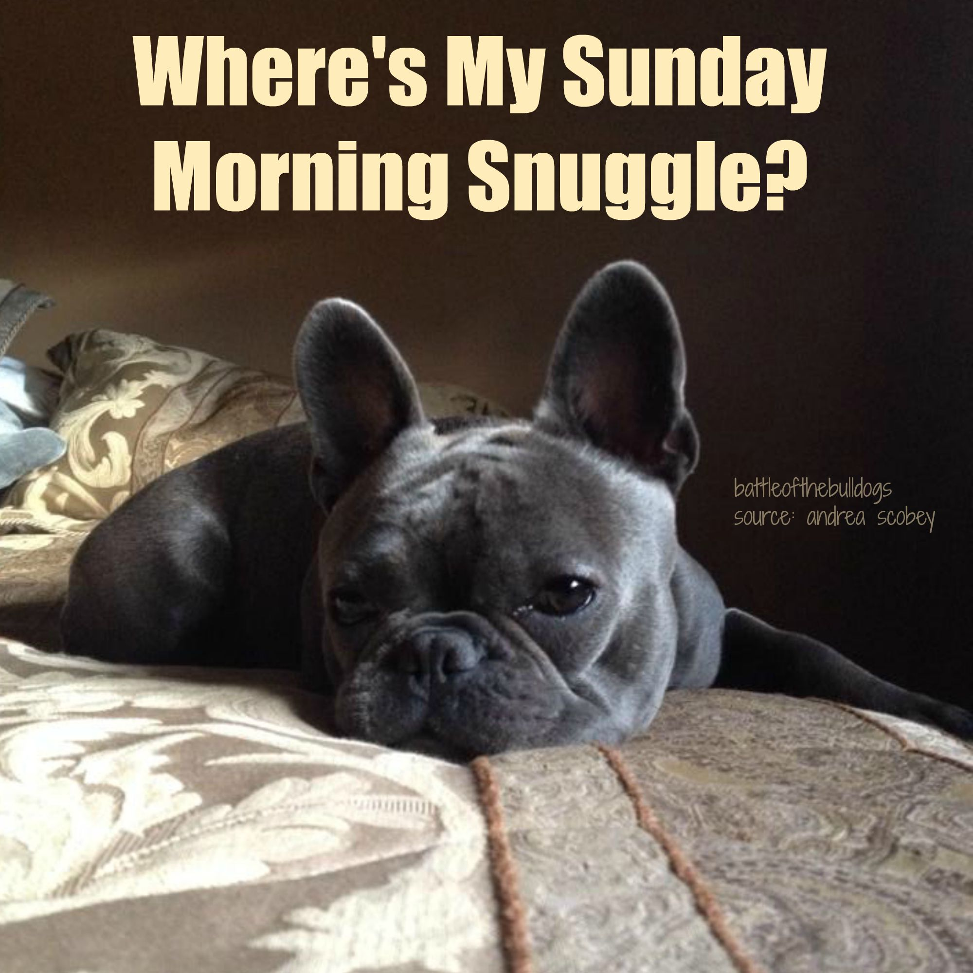 Where S My Sunday Morning Snuggle Funny Sunday Humor Dog Stories
