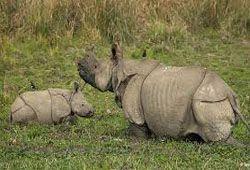 Wild Life in Assam