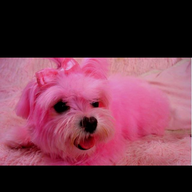 Pink Maltesey My Girls Never Learn How To Color Hair Otherwise