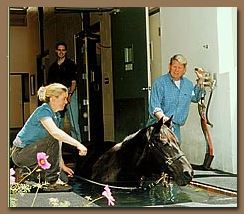 Post Surgery Recovery Pool for Horses by HydroHorse Equine ...