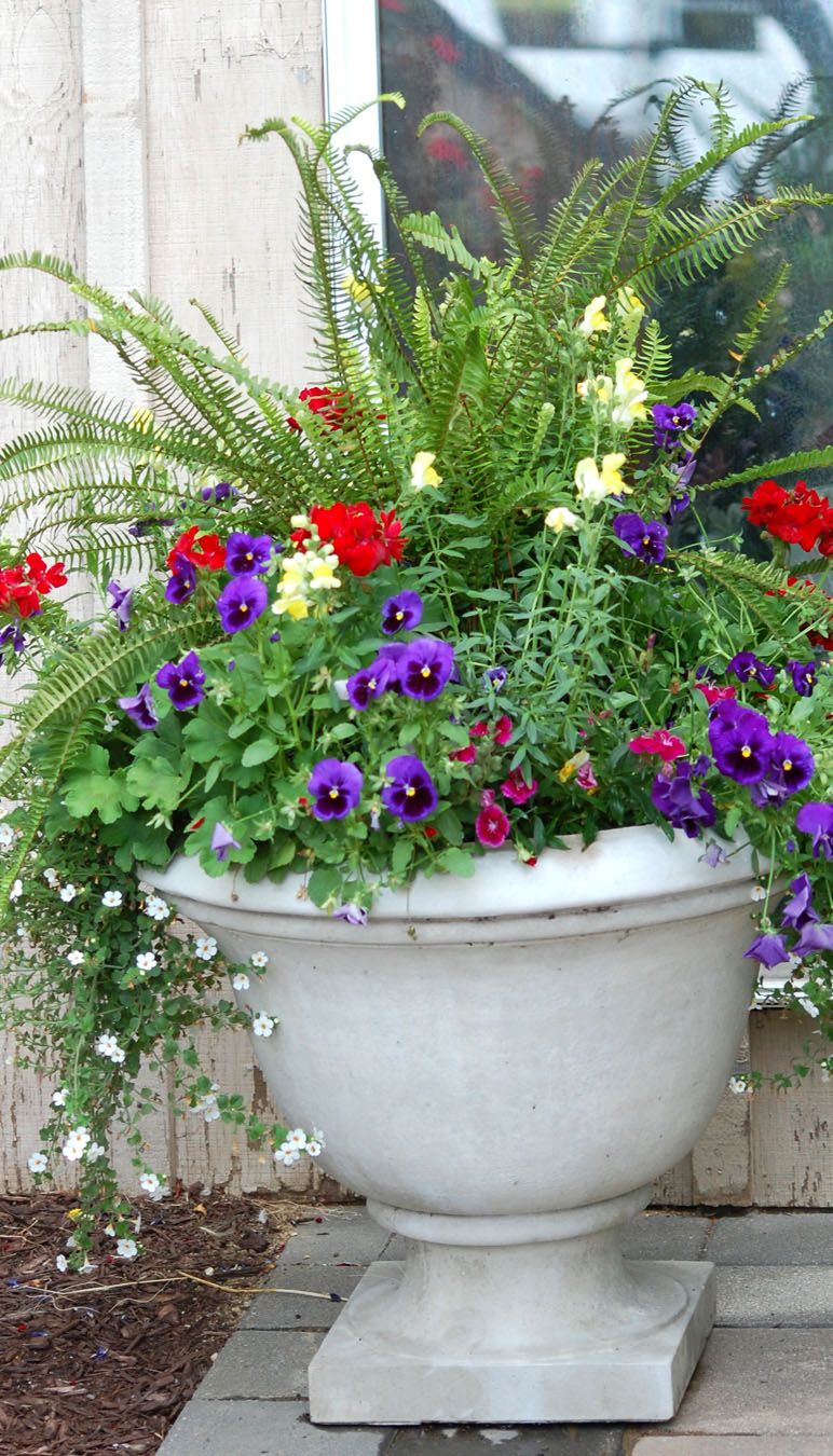 Ferns, pansies, snapdragons, geraniums and bacopa all