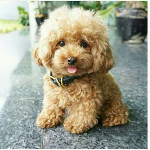 Follow Me For More Poppin Pins Uel Ibekwe Cute Animals