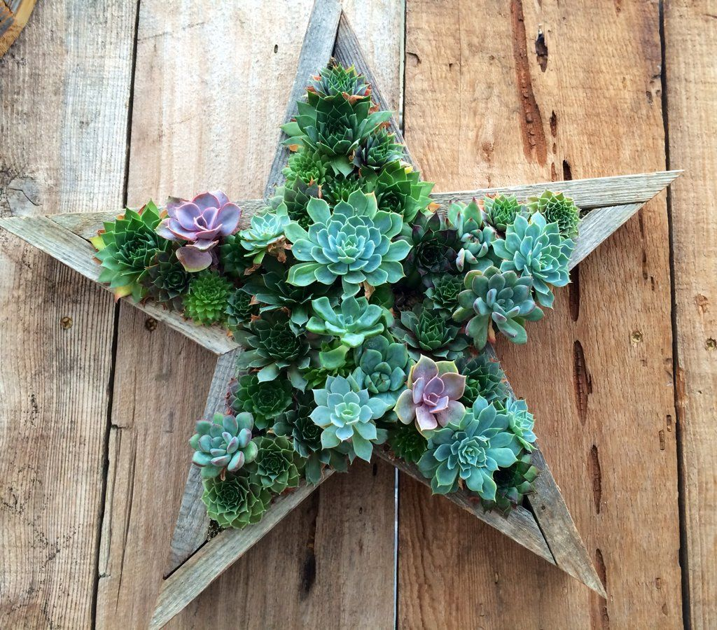 Handmade star living succulent frame wooden framed vertical garden handmade star living succulent frame wooden framed vertical garden planter beautiful mothers day gift jeuxipadfo Image collections