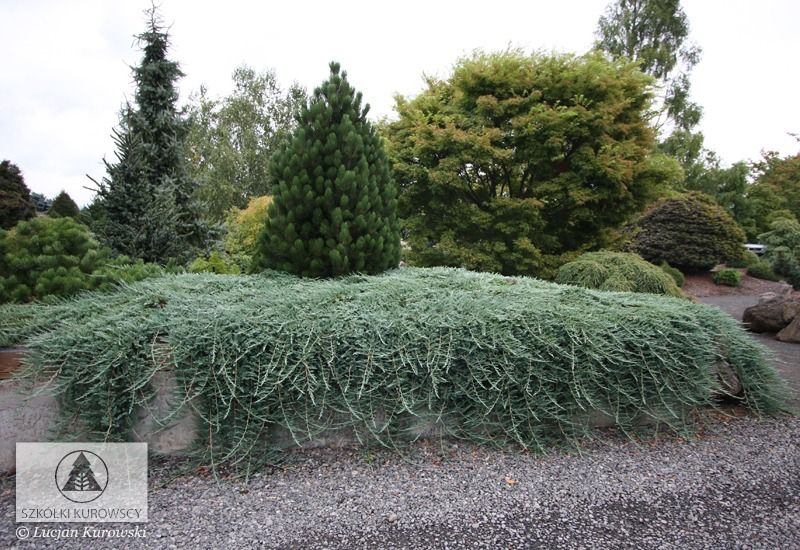 Pin By Sara On Gardens Conifers Ogrody Conifers Garden Landscaping Retaining Walls Landscaping Plants