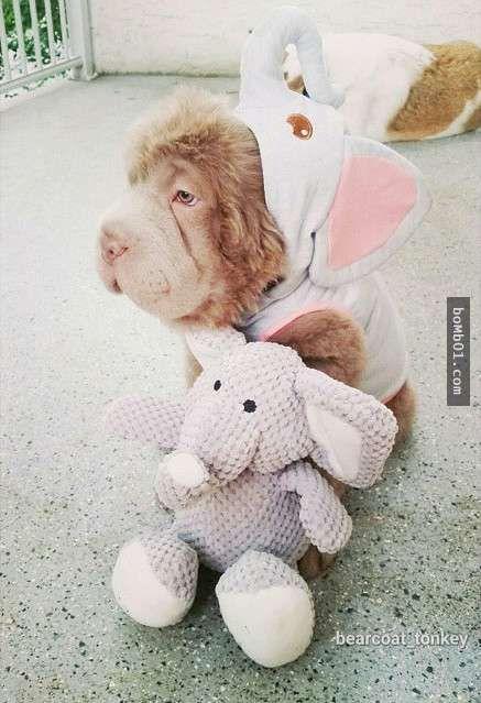 这只看似熊娃娃的动物其实是一种大家都很熟悉的狗狗,每个看过的人都会被它毛绒绒的模样征服! - boMb01