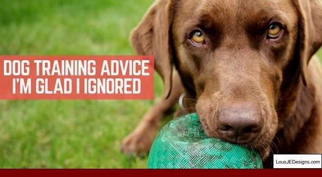How To Train Your Older Dog To Walk On A Leash And Pics Of Tips