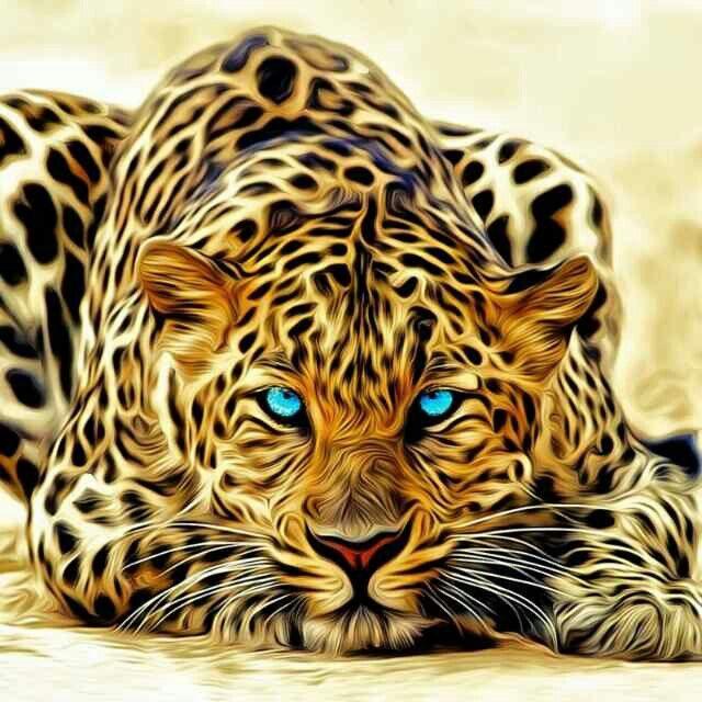 Gepard Tiere Wild Tiere Katzen Kunst