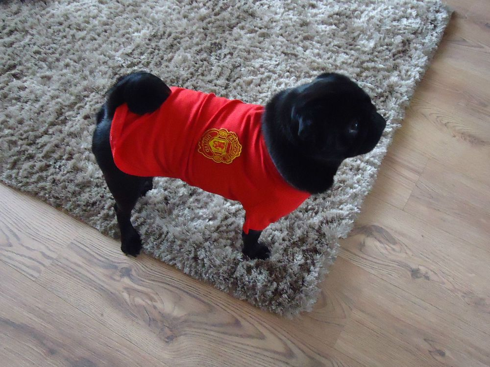 Manchester United Top For Dogs Pet Parade Dog Football Manchester United Top