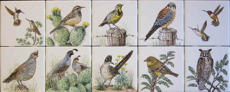 desert birds - Google Search