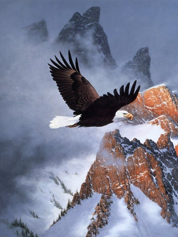 Snow Eagle Free Download Background Wallpaper HD