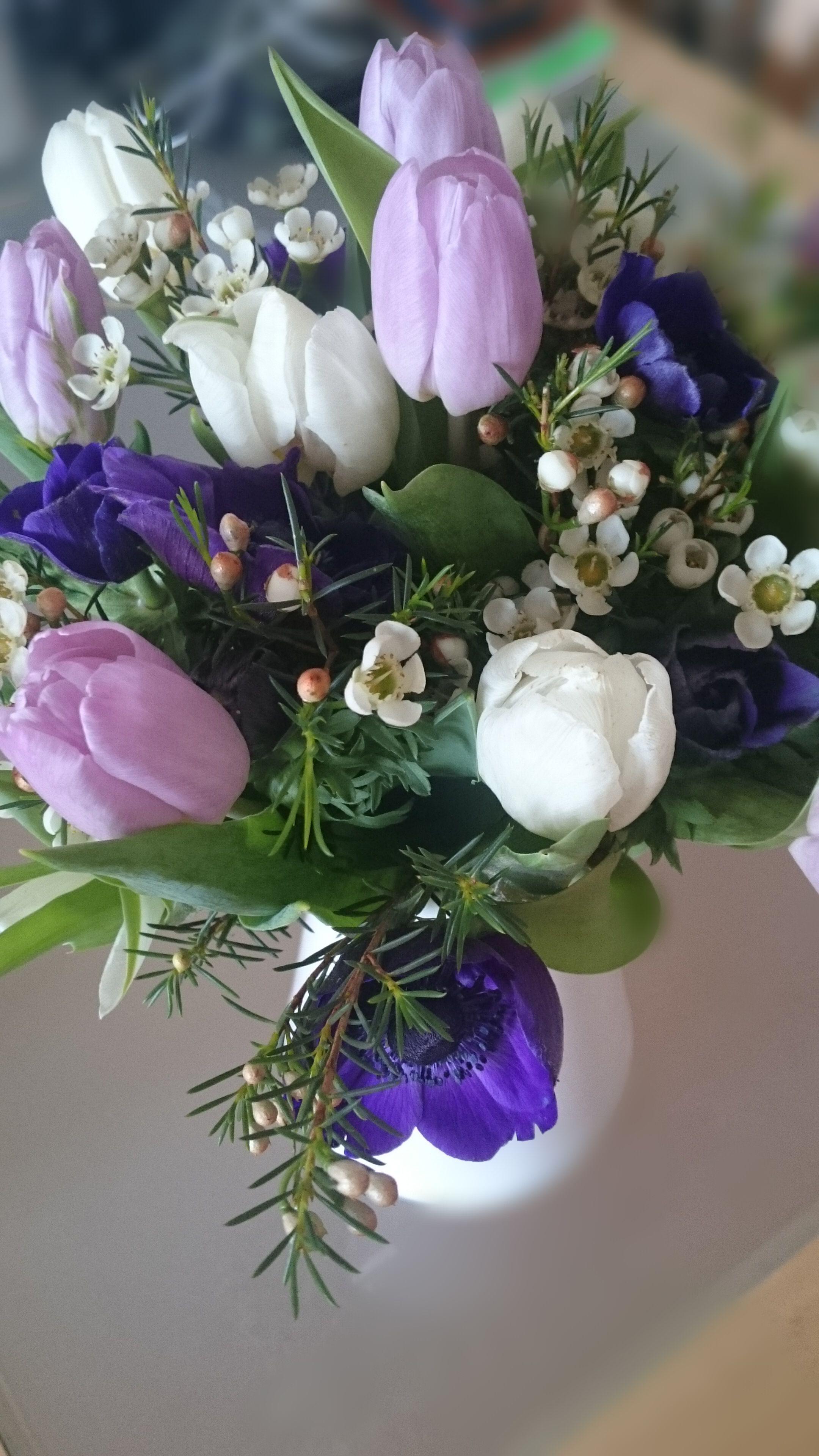Frühllings-Strauss - weiße und hell-lila Tulpen und Wachsblumen, lila Annemonen