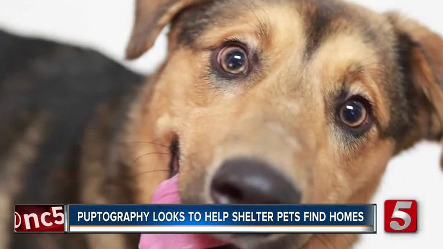 'Puptographer' helps shelter dogs find homes Shelter