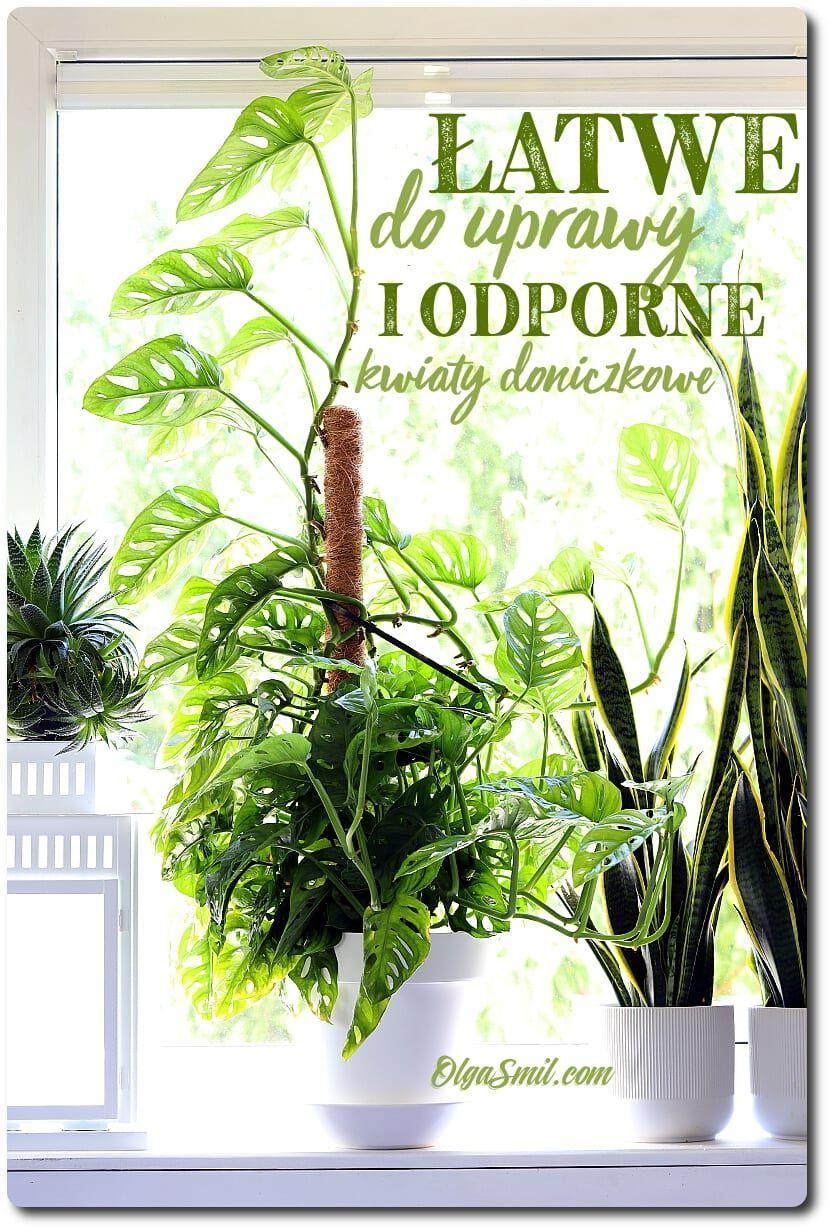Latwe Do Uprawy I Odporne Kwiaty Doniczkowe Plants Herbs Garden
