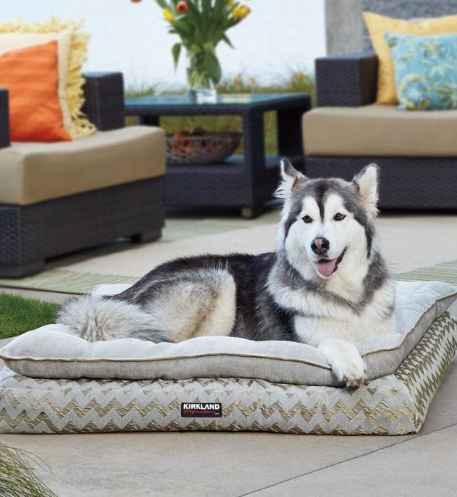 Unique Costco Dog Bed  Concept