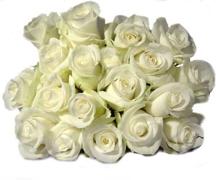 Ramo de rosas blancas. Wallpaper. Fondo blanco.