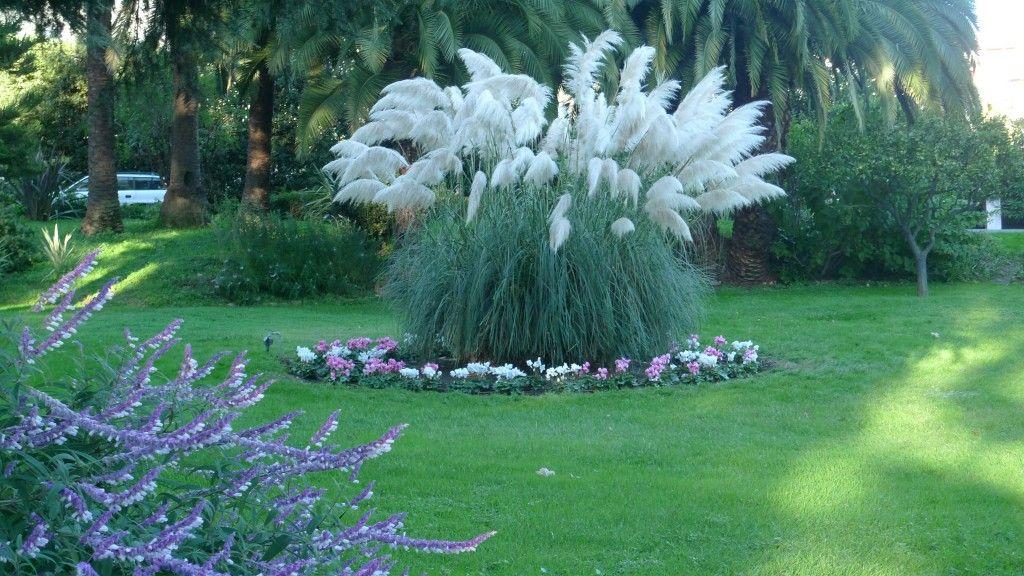 herbe de la pampa | Jardin | Pinterest | Jardins et Allées