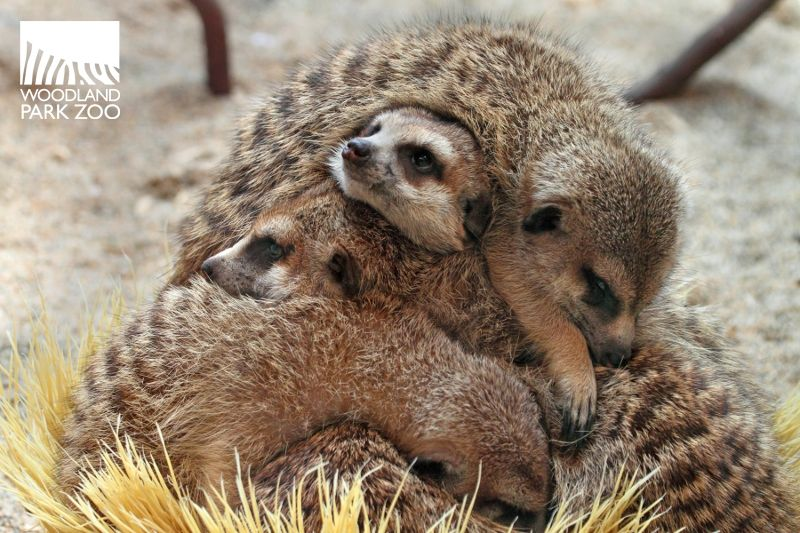 Cozy Critters Cute Animal Pictures Animals Cute Creatures