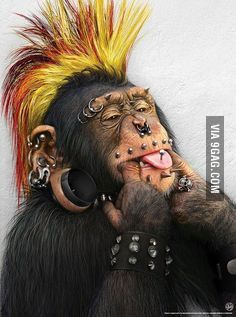 Googled punk monkey, was not disappointed