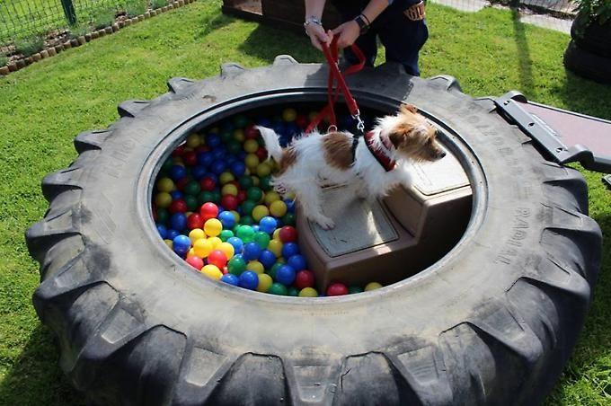 Woof Woof Hooray It S A Sensory Garden For Dogs Dog Playground Dog Backyard Dog Daycare