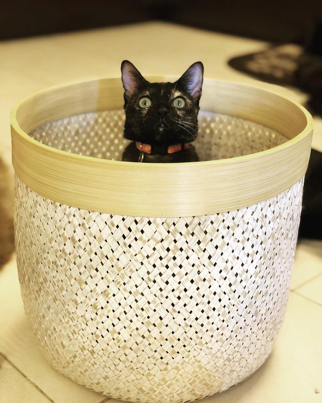 Tortie in a basket #cats #catsofinstagram #catlovers #meow #neko #kitty #cute #tortiesofinstagram #crazyplantlady #ilovecats