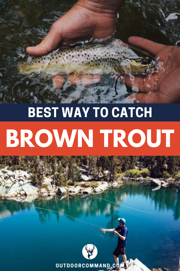 Best Way To Catch Brown Trout in 2020   Brown trout, Trout ...
