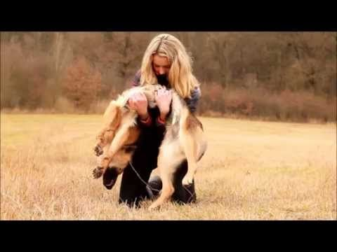 (Video) Wow! German Shepherd Doing Amazing Tricks - German Shepherd Vine