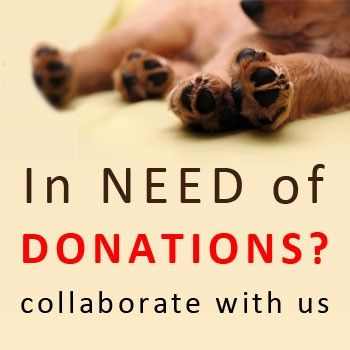 #BudgetPetCare Announces Pet Supplies #Donation for #Animal Shelters. #petcare
