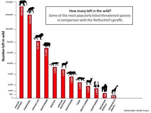 Endangered species graphs google search human population growth endangered species graphs google search altavistaventures Gallery