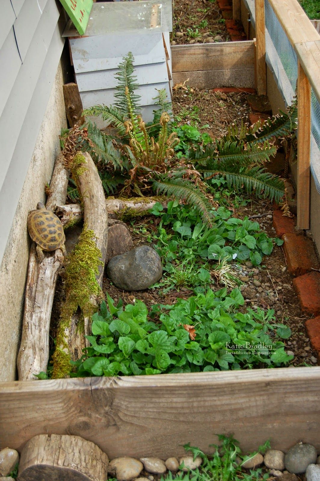 Here is a photographic tour of our outdoor tortoise yard - Terrario para tortuga ...